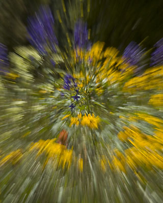 colorado wildflower abstract blue yellow motion