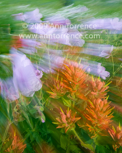Flowers in motion, Albion Basin floral abstract