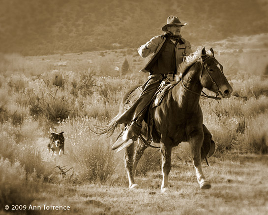 sepai cowboy horse border collie dog sagebrush ranching Utah riding