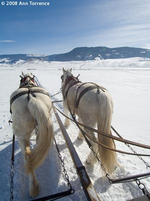 draft horses pull sleigh on National Elk Refuge, Jackson Wyoming