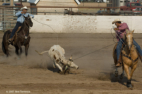 Team roping at the North American Indian Days INFR rodeo
