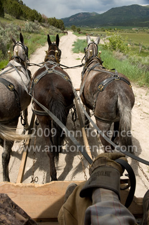 mule wagon Sanpete County Fairfield Utah