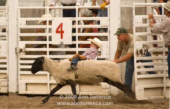 mutton busting rodeo Utah, U.S. Highway 89