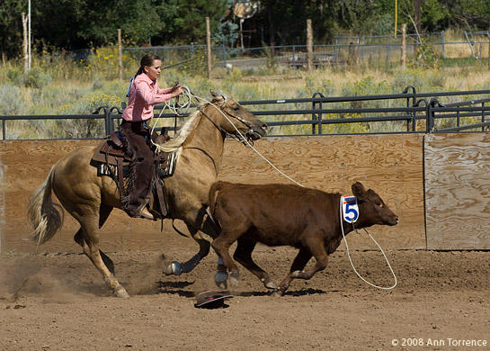 ranch horse competition rodeo cattle steer cow  cowboy cowgirl roping