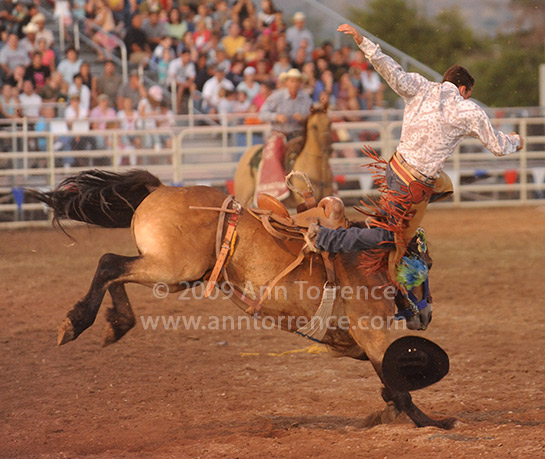 saddle bronc bucking stock