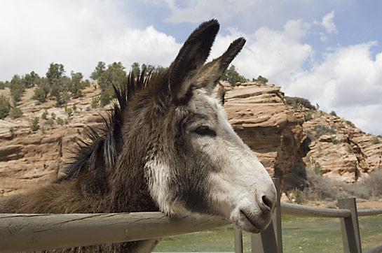donkey sweetheart cute Best Friends Animal Sanctuary