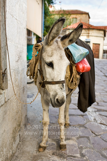donkey Stipsi Lesbos Greece