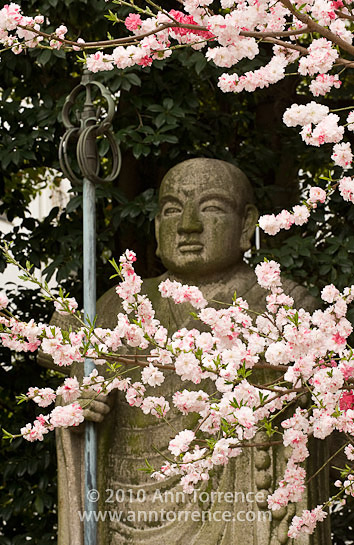 buddha cherry blossoms Osu Kannon temple Nagoya Japan