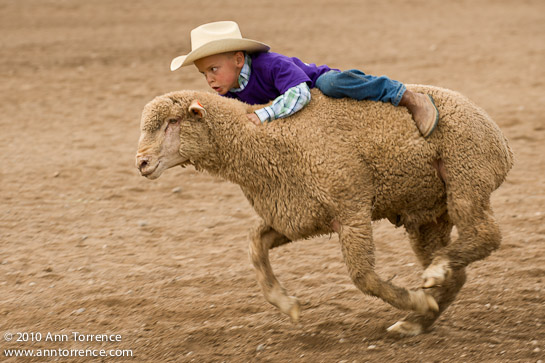 small fry rodeo mutton bustin