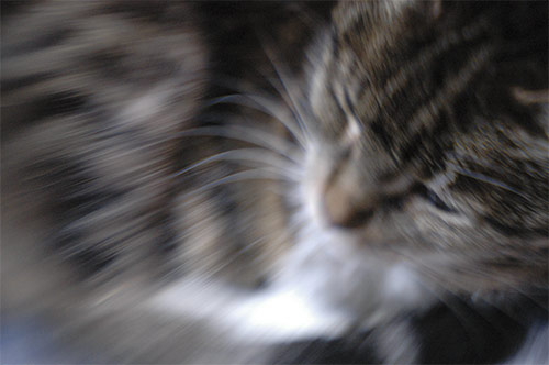 lensbaby image of a cat