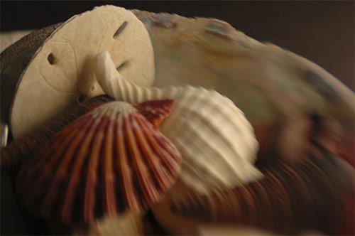 lensbaby still life seashells