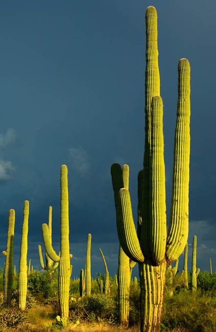 Monsoon Season, Saguaro National Park