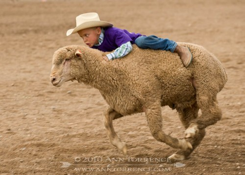 Mutton Bustin' at the Wayne County Small Fry Rodeo, Loa, Utah