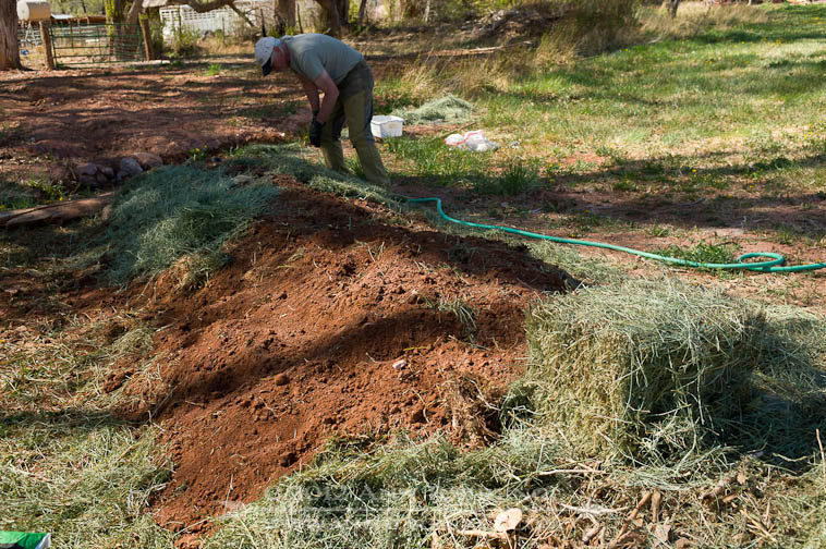 Mulching the top of the Hugelkultur bed, a permaculture strategy for low-water usage, built in Wayne County, Utah