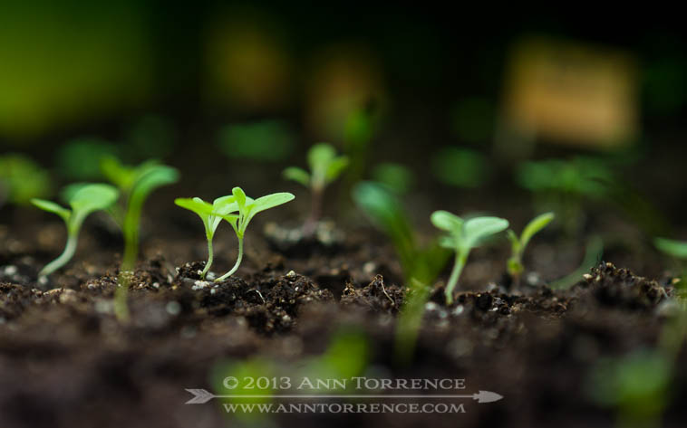 Seedlings under artificial lights