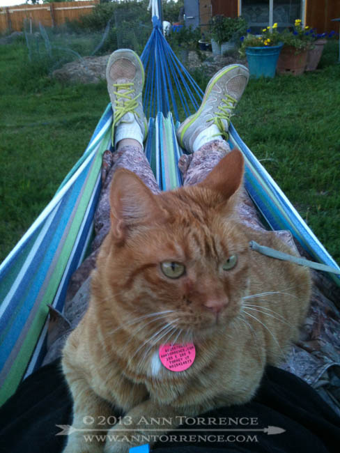 Mango tries out the hammock. It was her idea. Someday I will have a new IPhone with a better camera.