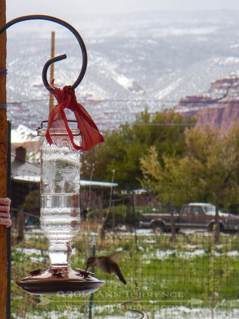 Hummingbird feeder on the porch