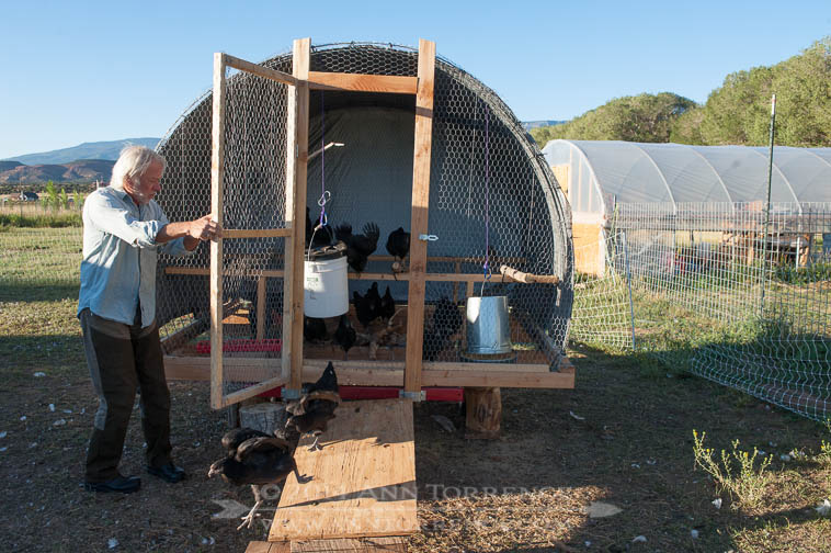 R opening the Chickestoga, a mobile chicken coop built from a trailer kit and some livestock panels