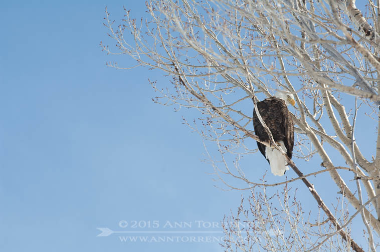 A bald eagle, symbol of our country's freedom and justice for all, including Gary Tyler.