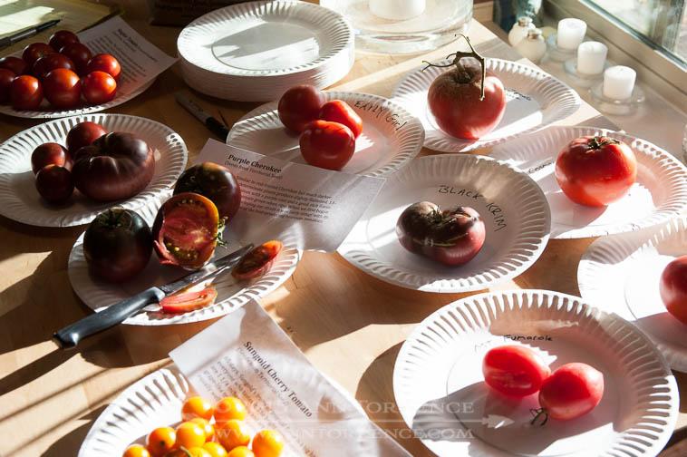 Tomato tasting party